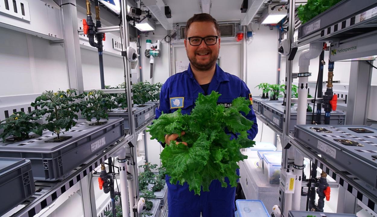 Közel három mázsa zöldség termett az Antarktiszon