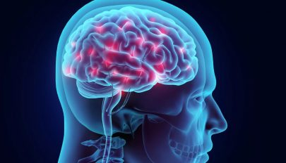 Magyar kutatók bizonyítékot találtak arra, mi befolyásolja az intelligenciát