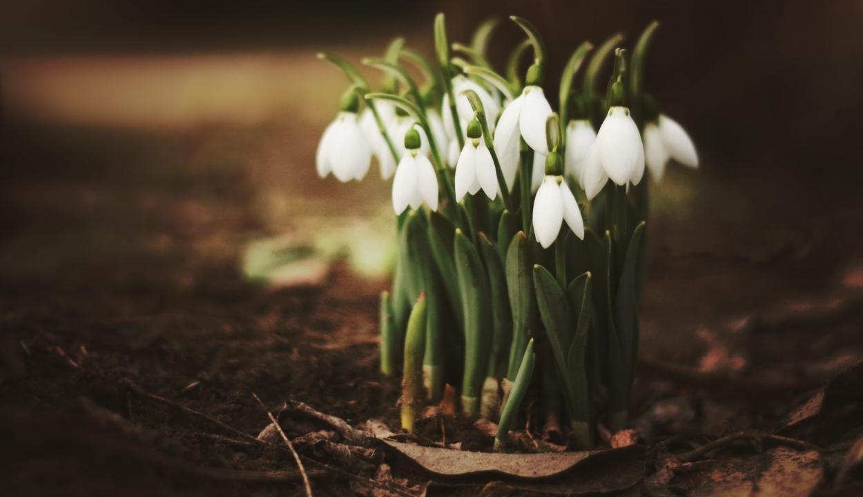 Tavasziassá fordul az időjárás a következő két hétben