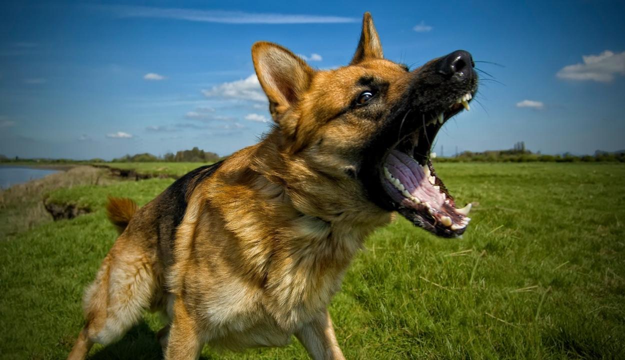 Miért idegesítő a kutyaugatás?