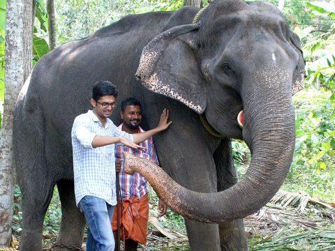 Elpusztult a világ legöregebb elefántja