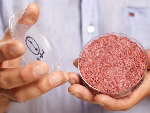 Több kárt okozhat a környezetnek a laboratóriumi hús, mint a marhatenyésztés