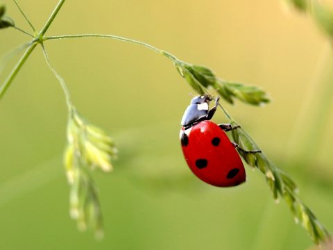 Riasztó mértéket ölt a rovarfajok kihalása