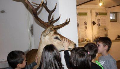 Adományokból gyarapodik a vadászmúzeum