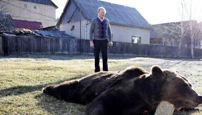 Kilőttek egy medvét