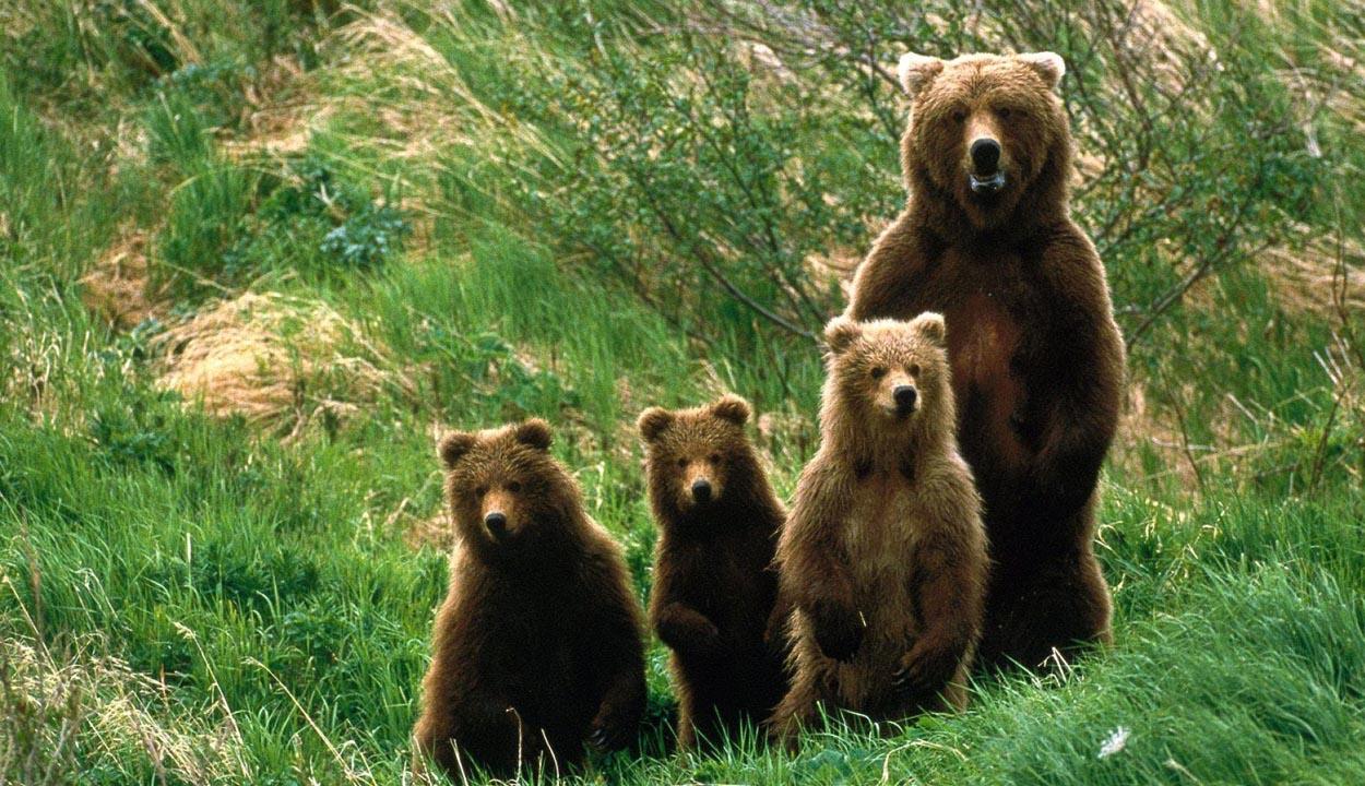 Medvebocsokat árusítanak?