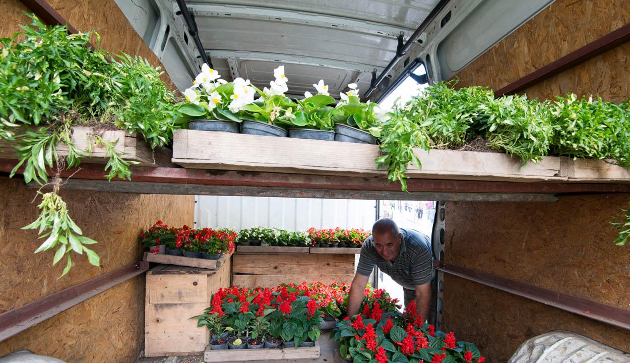 Az önkormányzata a lakónegyedi zöldövezetek szépítését támogatja