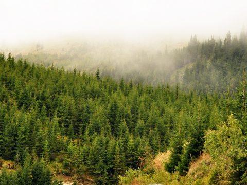 12.600 hektáros területet tervez újraerdősíteni idén a Romsilva