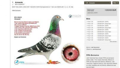 1,25 millió euróért kelt el egy postagalamb Belgiumban