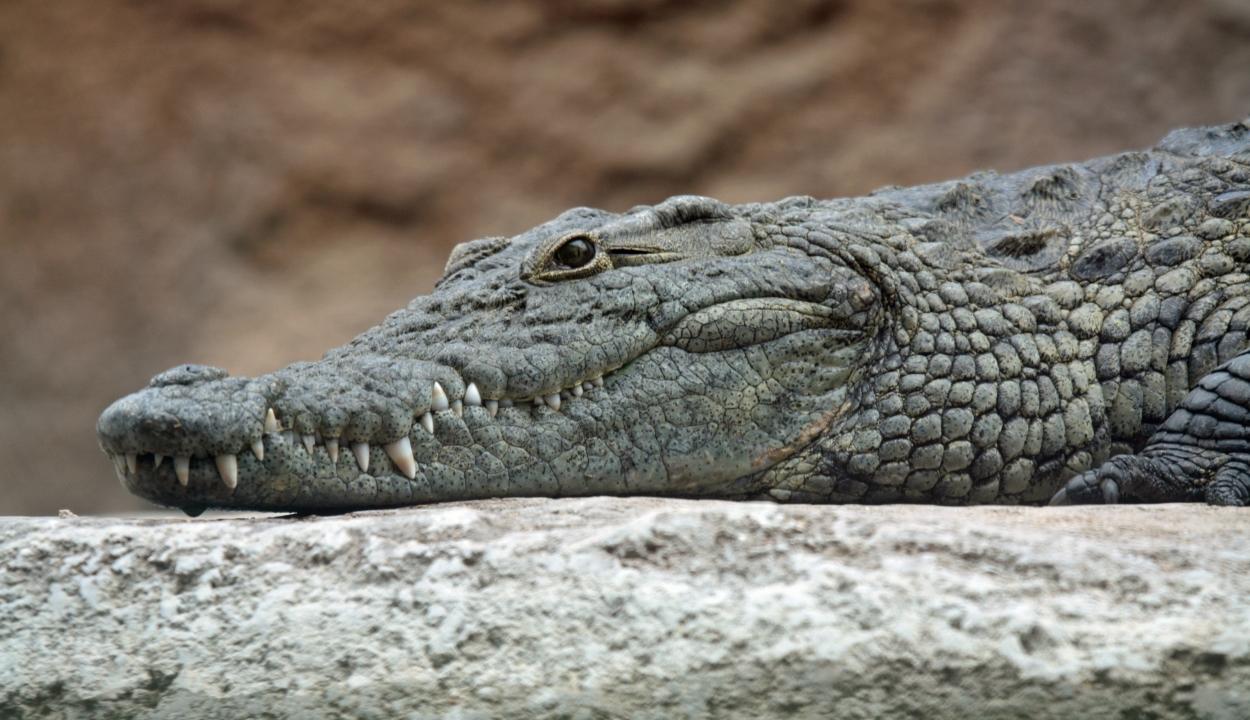 Erdélyi tudós fedezte fel: az őskori madarak krokodilokkal osztották meg fészküket
