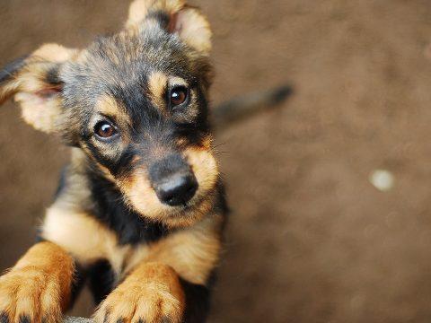 Az epilepsziás betegeken is segíthetnek a kutyák