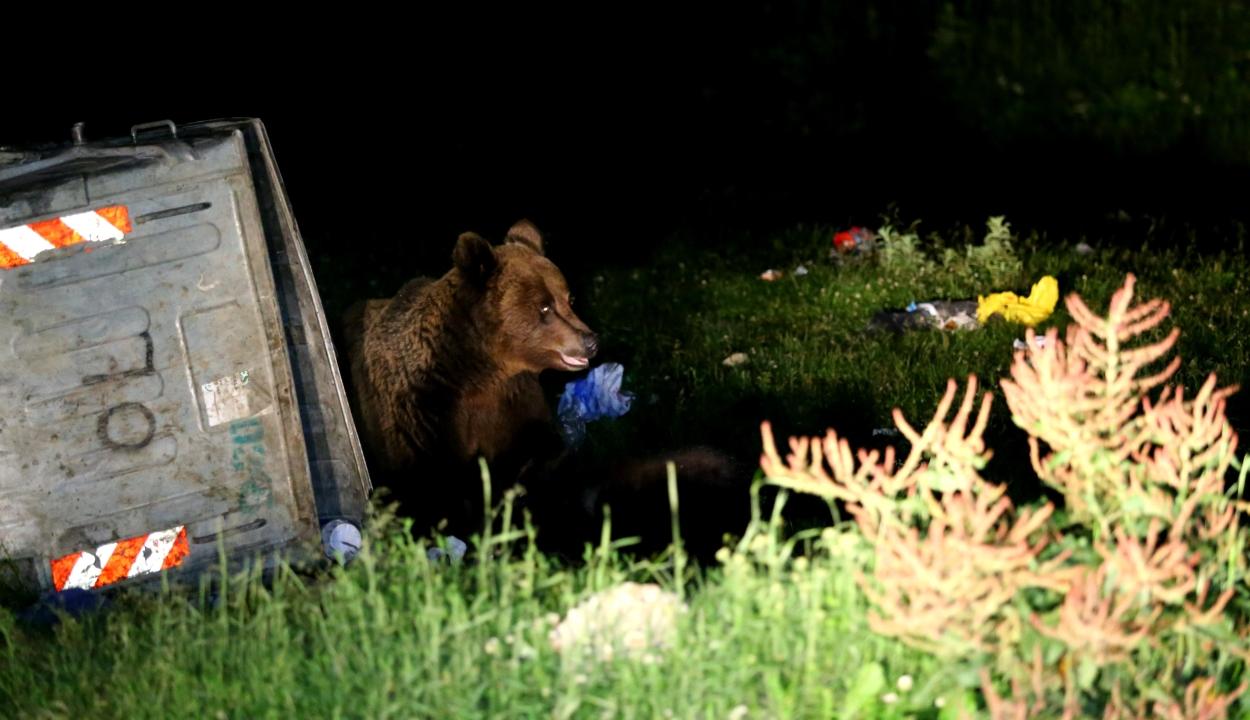 Konténerben rekedt medvebocsot szabadítottak ki a csendőrök Tusnádfürdőn