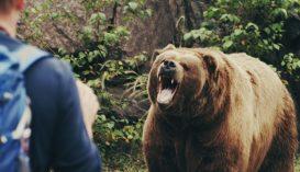 Medvével akart fotózkodni, majdnem baj lett belőle