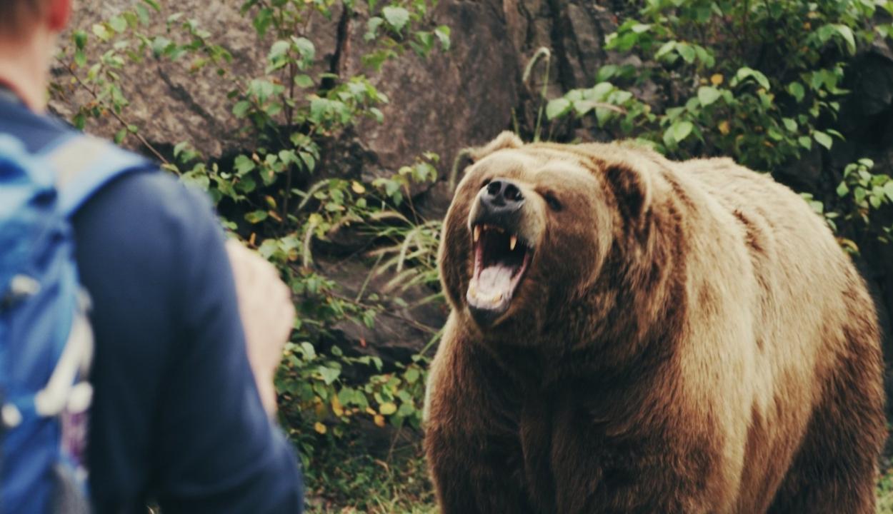 Medvével akart fotózkodni, majdnem rossz vége lett