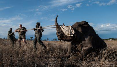 Visszafordíthatatlan károkat okoz az orvvadászat az élővilágban