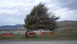 Felerősödő szélre figyelmeztetnek Kovászna megyében is