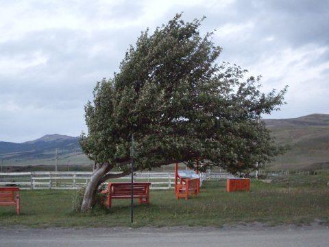 Sárga riasztás 27 megyében az erős szél miatt