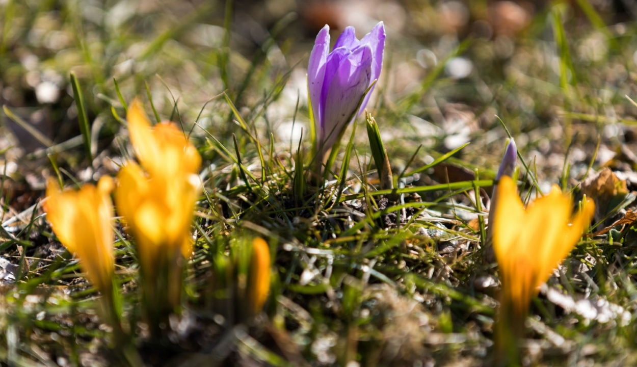 Itt a tavasz: meleg időre számíthatunk a következő két hétben