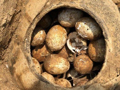 Több ezer éves ép tojásokat találtak egy kínai sírban