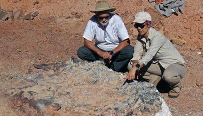 Óriási dinoszaurusztemetőre bukkantak Argentínában
