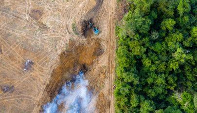 Egymillió fajt fenyeget a kipusztulás az emberi tevékenység miatt