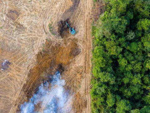 Az erdőirtáshoz köthető szén-dioxid-kibocsátás jóval alacsonyabb az eddig véltnél