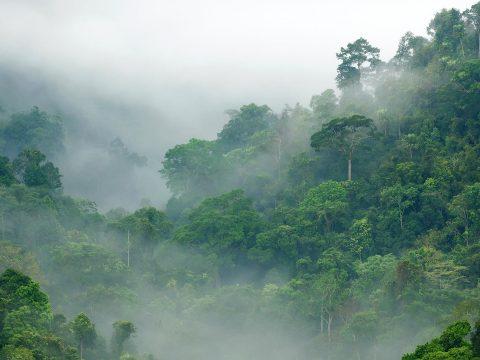 Világszerte több millió hektár trópusi erdő tűnt el tavaly