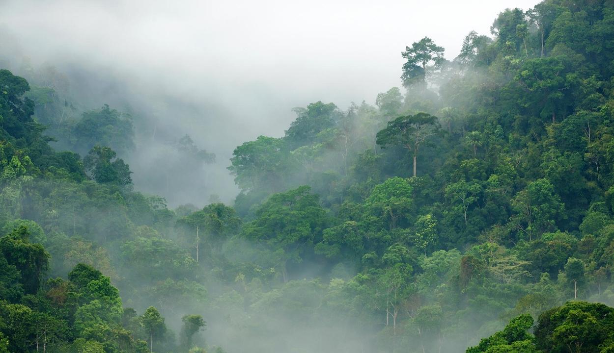 A szén-dioxid-többlet lassíthatja is a klímaváltozást