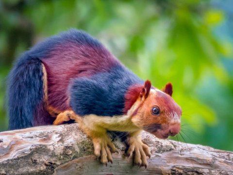 Különleges mókust fotóztak Indiában