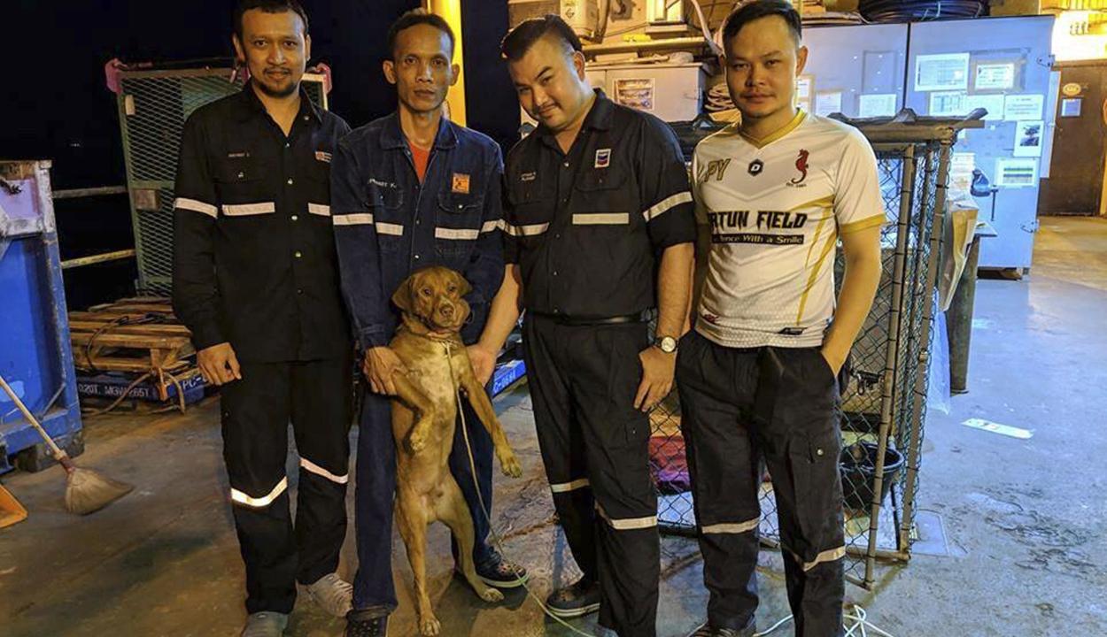 220 kilométerre a parttól mentettek ki egy kutyát a vízből