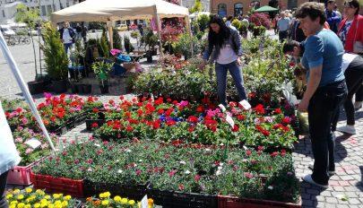 Virágvásár ötödször