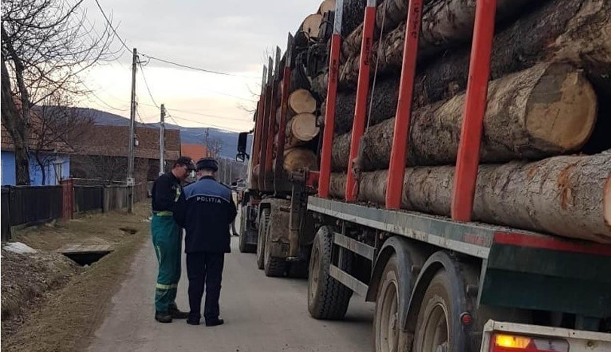 Leállítanák a rönkfa-kivitelt