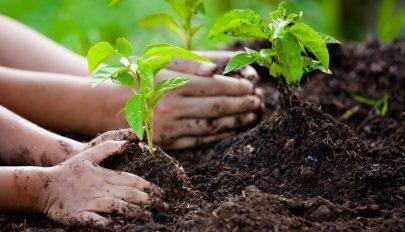 Több mint 200 millió fát ültettek el egyetlen nap alatt Etiópiában