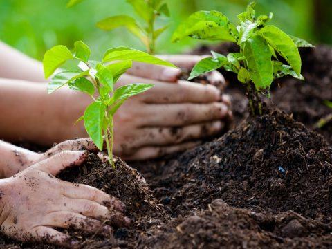 Tíz fát kell elültetni a diákoknak a Fülöp-szigeteken, ha le akarnak diplomázni
