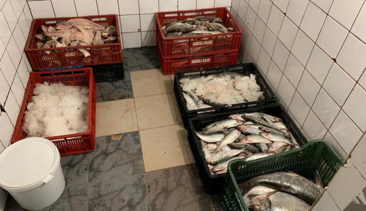 Öt országra kiterjedő orvhalász bandát lepleztek le