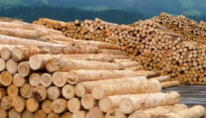 Tíz évre megtiltják a rönkfa kivitelét az EU-n kívüli országokba