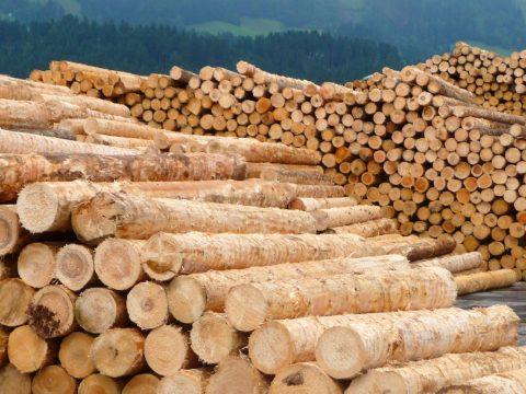 Dragnea megtiltaná a rönkfa exportját 2020-tól