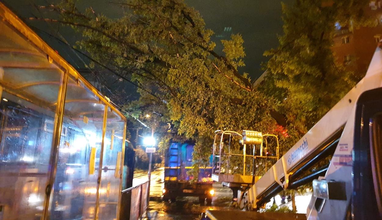 Fák, villanyoszlopok dőltek ki, háztetők rongálódtak meg a vihar miatt a Bánságban