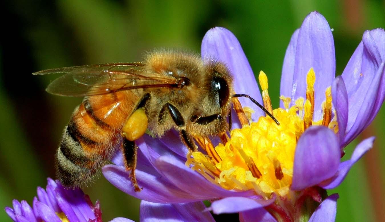 Támogatás hiányára panaszkodnak a méhészek