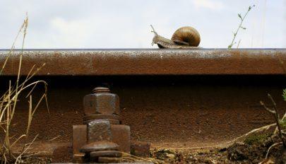 Egy csiga okozott vasúti káoszt Japánban