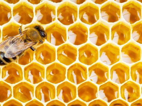 Drasztikusan csökkent tavaly télen a mézelő méhkolóniák száma