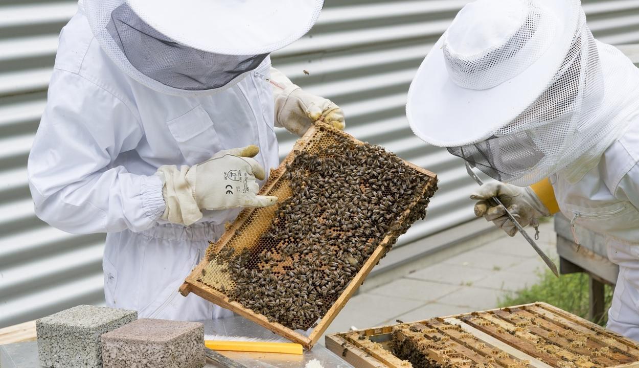 Az EU 120 millió euróra növeli a méhészeti ágazat támogatását