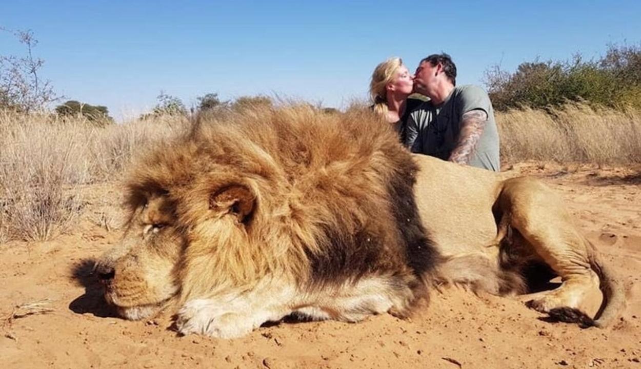 Az agyonlőtt oroszlán teteme felett csókolózott egy szerelmespár