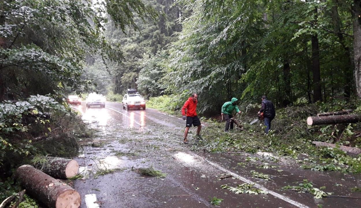 Fákat döntött ki a vihar Háromszéken, leállt a vasúti forgalom Bükszád és Málnás között
