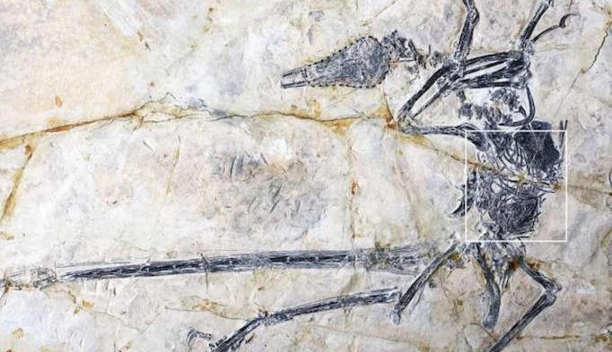 Eddig ismeretlen gyíkfajt azonosítottak kínai kutatók