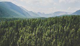 A romániai erdők területe több mint 9000 hektárral nőtt 2019-ben az előző évhez képest