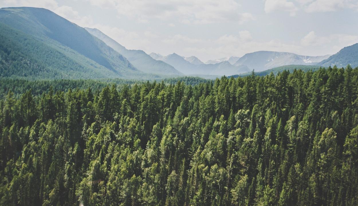 Környezetvédelmi miniszter: védelem alá kerülnek a 140 évesnél idősebb erdők