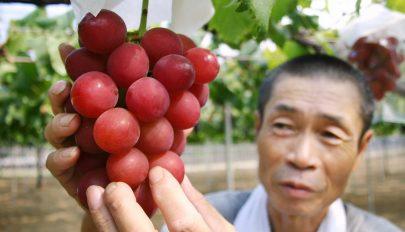 Tízezer euróért kelt el egy fürt szőlő Japánban