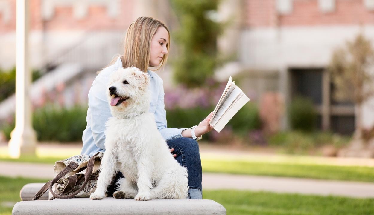 Kutyás foglalkozásokkal csökkenthető az egyetemisták stressze