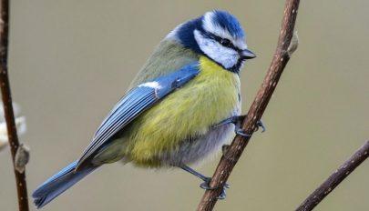Túl lassan alkalmazkodnak a klímaváltozáshoz a madarak